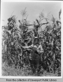 Farmer in his corn field